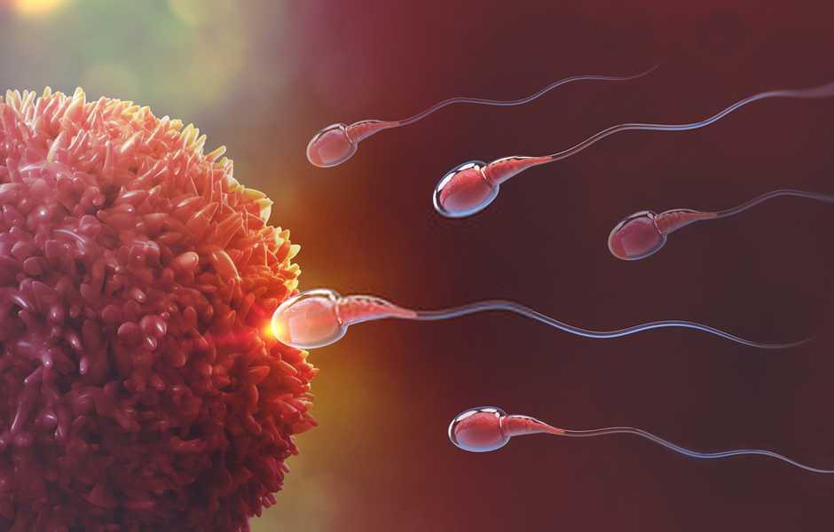 integratori fertilità maschile