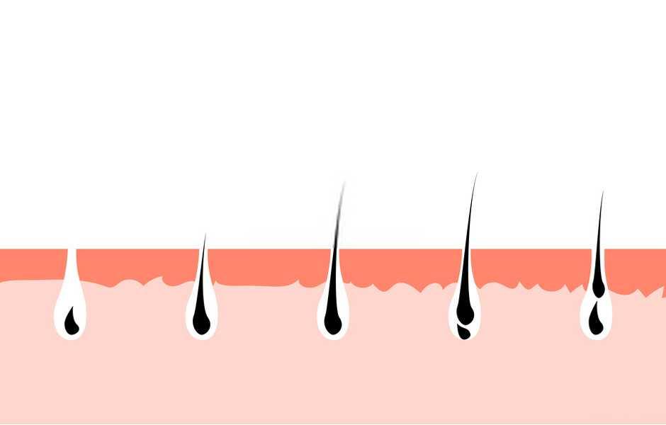 fasi della crescita dei capelli