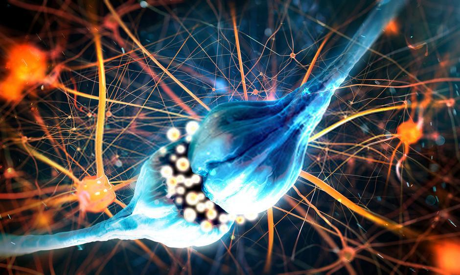 neurotrasmettitori principali